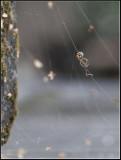 Climbing a spider´s web