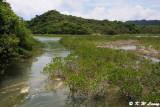 Mangroves @ Yim Tin Tsai DSC_5187