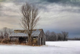Barn In A Field 05958