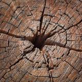 Weathered Stump 72992