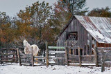 Rustic Horse Shed 20110308