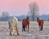 Three Horses At Dawn 20110315