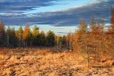 Marsh At Sunrise 08044