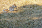 Squirrel In The Sun DSCF01026
