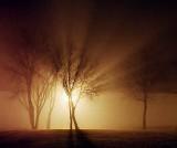 Trees In Fog 20110414