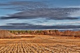 Fieldscape 08861
