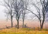 Trees & Split Rails 09044