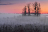 Trees In Mist 09206