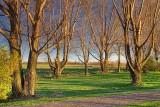 Bare Trees At Sunrise 09514