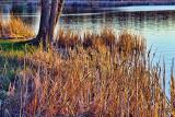 Shore Grass 09467
