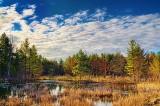 Morning Marsh 09644-6