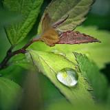 Rain Droplet 25543-4