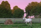 Bale & Horse At Sunrise 10473