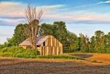 Barn In A Field 10639