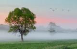 Misty Dawn 10579