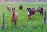 Friendly Horses 10700