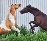 Horseplay 20110610