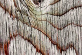 Wood Grain 11033