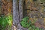 Twin Trunks 20110619