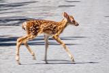 Bambi On The Road DSCF01983