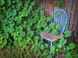 Chair In Ivy 20110706