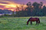 Grazing Horse At Sunrise 13826-7
