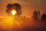 Tree In Misty Sunrise 20110810