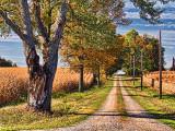 Autumn Farm Lane 16456