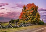 Autumn Tree At Sunrise 16976-8