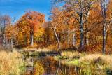 Autumn Scene 20111011