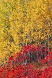 Autumn Leaves 17889