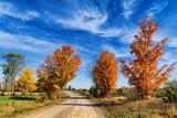 Autumn Back Road 17915