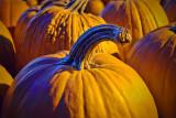 Autumn Pumpkins 20111016