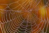 Dewy Web 16734