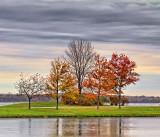 Autumn Trees 20111019