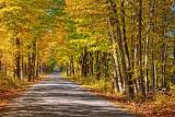 Cove Road In Autumn 17508