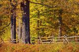 Autumn Landscape 17490