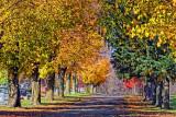 Autumn Cemetery 20111022