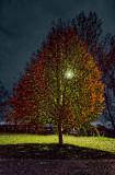 Autumn Tree At Night 20111023