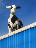 Cow On A Roof 20111119