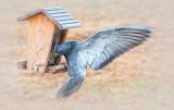 Pigeon-toed 26136