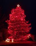 Holiday Lights 20111207