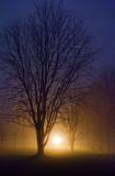 Foggy Lockstation Trees 20111214