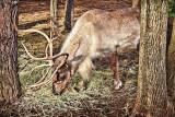 Reindeer Lunch 20111216