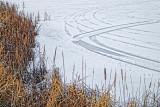 Tracks On Ice 20120110