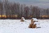 Snowy Bales 20297