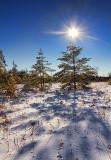 Snowscape 20833