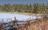 Snowscape 20893-4