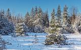 Snowscape 20848