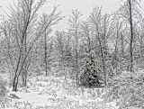 Snowscape DSCF03879